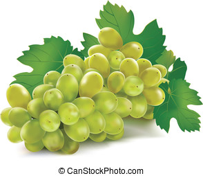 Grape Vector Mesh