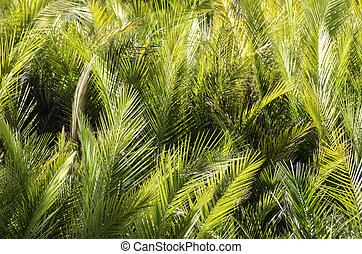 Palm leaves background