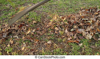 Raking Fall Leaves out of grass