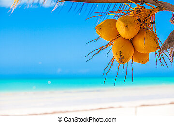 Close-up of tropical palm tree with yellow coconut against...