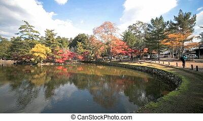Autumn Japanese garden with maple - kyoto, japan, autumn,...