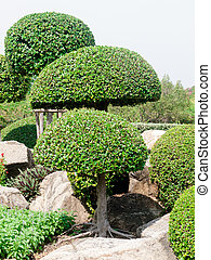 Wood shrubs - beautiful wood shrubs in garden