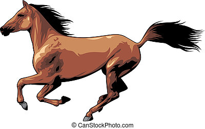 brown wild horse isolated on the white background