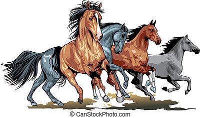 dziki, konie