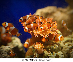 tropical fish - fine image of tropical fish in acquarium...