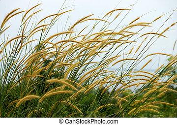 Yellow flower grass