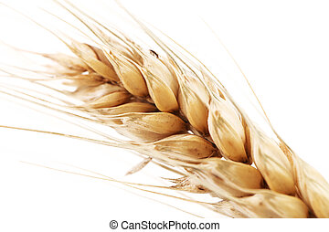 Barley ear over a white background - Closeup of a barley ear...