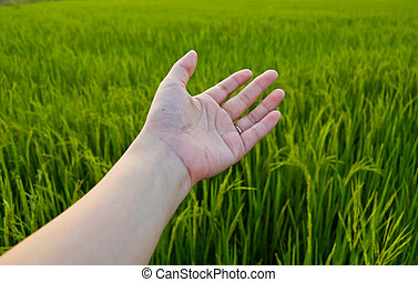 Hand on green field