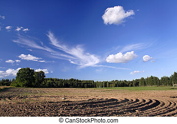 Cultivated a field in picturesque to the nature - The field...