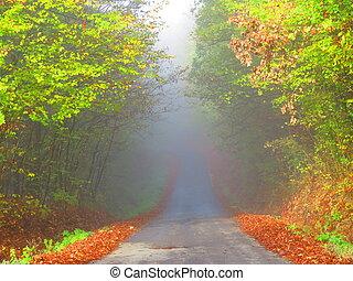 Mist - Road in autumn