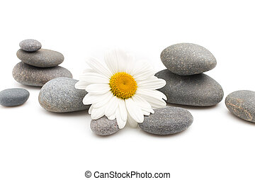 Spa stones. - Balanced spa stones with camomile flower and...