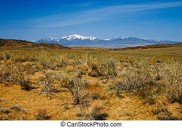 Sand dunes in desert national park Altyn-Emel, Kazakhstan...