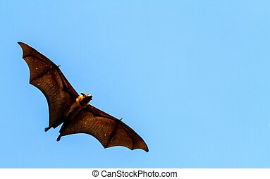 Flying Fox flying