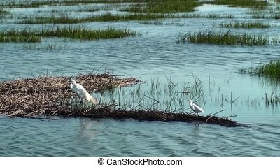 Egrets In The Marsh - Egrets in the marsh on a summer day