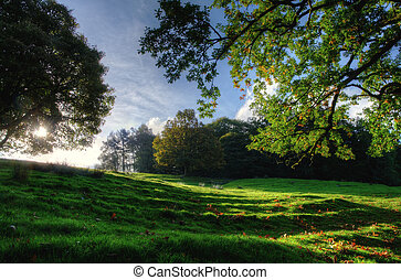 Sloping meadow with overhanging trees - View of a sloping...