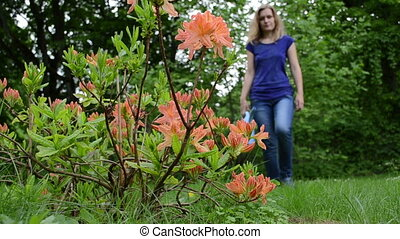 woman rhododendron water - gardener woman water orange...
