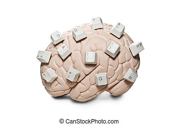 Brain with computer keys - Human brain model with computer...