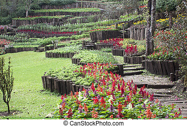Public Gardens and Bushes greenery and flowers - Ornamental...