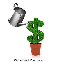 dollar, growing in flowerpot