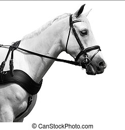 Profile Shot of a White Carriage Pony