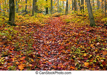 fall - Path in maple forest near Killarney Lake October