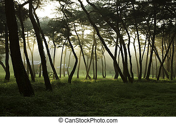 grün, wald, Bäume