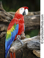 Macaw Bird in nature