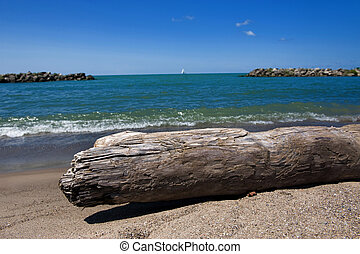 Driftwood on beach - Driftwood laying on the beach with view...