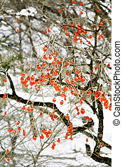 Persimmon winter landscape
