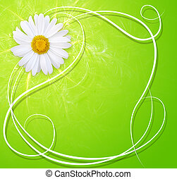 Fresh background with marguerite - Fresh spring background...