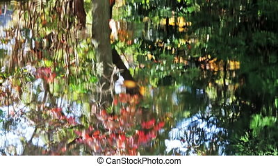 Japanese Maple over Pond in Autumn