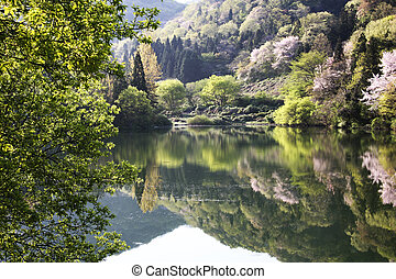 Beautiful spring landscape in south korea,Seryangji