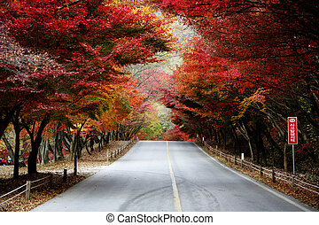 Fall foliage road