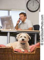 Dog lying in home office with man in background