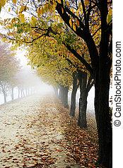 Fall foliage road