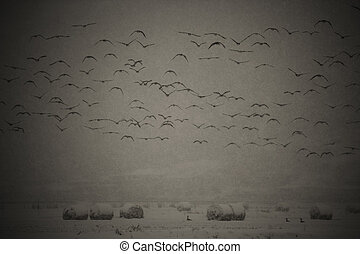 Rural winter landscape migratory birds in south korea