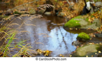 Reflection in forest river at autumn day - Peaceful autumn...