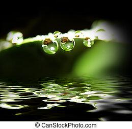 water drop background - fine macro image of water drop...