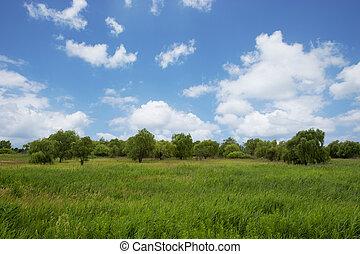 綠色, 草地