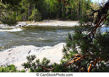 River rapids and pine branch closeup in Langinkoski Finland