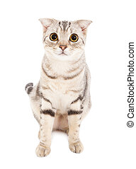 Cat isolated over white background Animal portrait