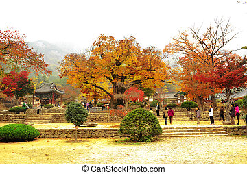 Autumn landscape with temples in south korea, Naesosa