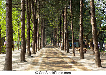 Beautiful landscape in South Korea,Nami Island Forest Road