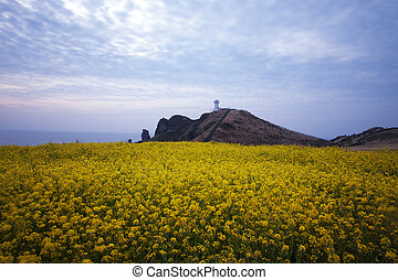 beautiful Jeju Island in South Korea,Seopjikoji
