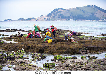 Beautiful landscape in south korea ,Jeju,Fishing Village