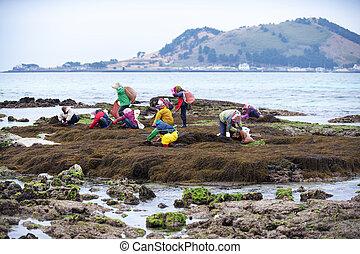 Beautiful landscape in south korea ,Jeju,Fishing Village