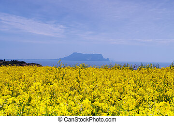 Seongsan Sunrise Peak beautiful Jeju Island in South Korea...