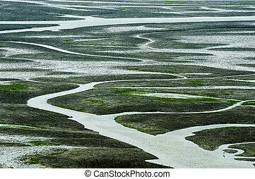 Beautiful landscape in South Korea,SinanSaltern, S. japonica