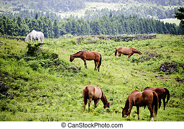 beautiful Jeju Island in South Korea,Meadow ,horse