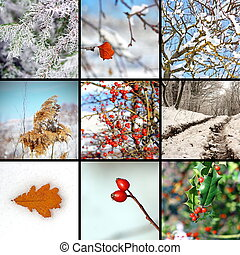 collage with winter images from nature